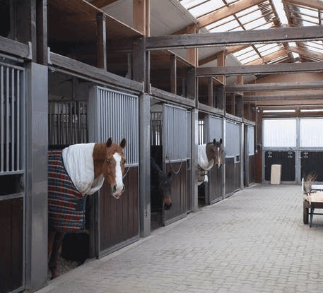 Forbes Professional Delivers the Optimum Equine Laundry Solution
